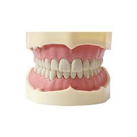 Zestaw Szczęk do Fantomów 28 zębów